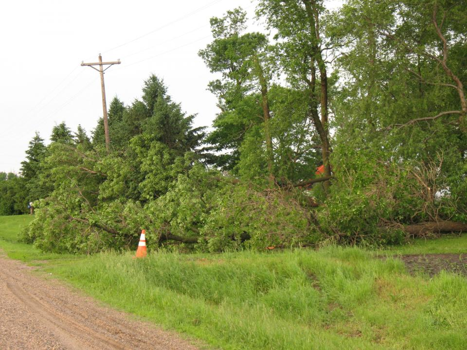 Downed Tree and Power Lines